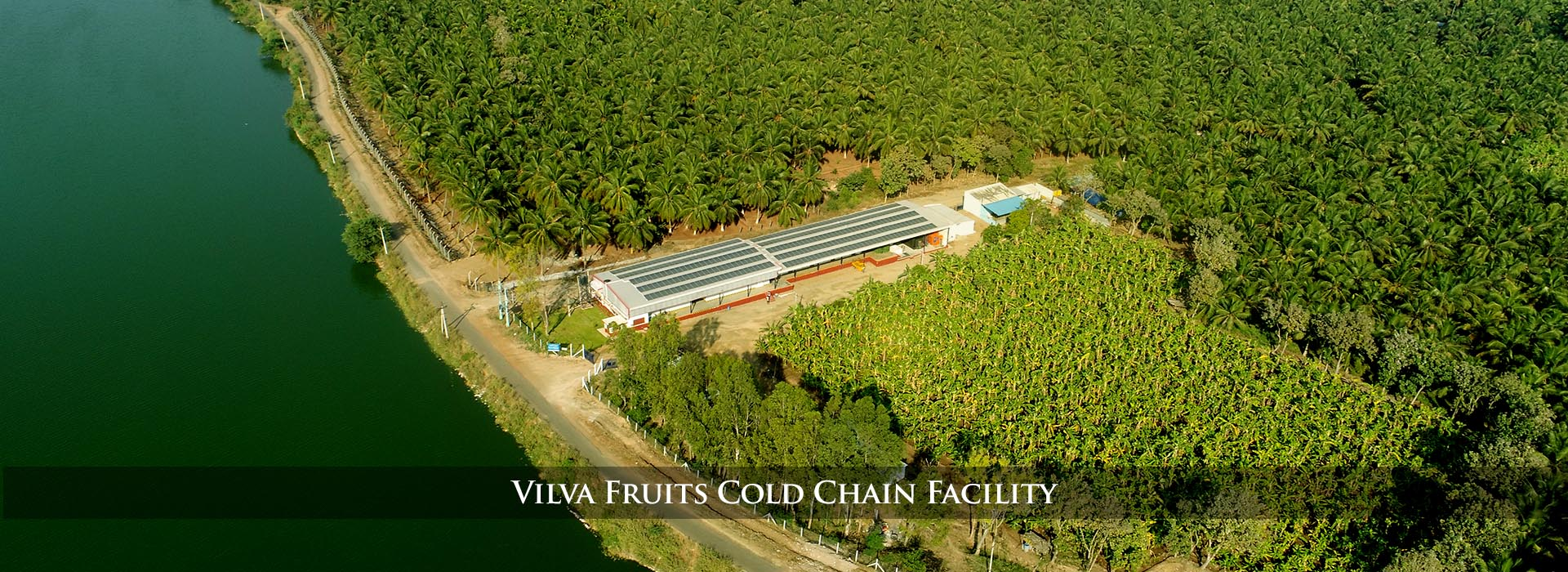 Vilva Fruits : Importer & Exporters of Fruits and Vegetables